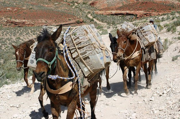 There is still one route left in the country where mail travels by mule.