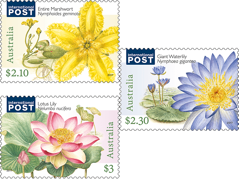 Strikingly beautiful water flowers appeared on stamps three aquatic plants are generally categorised into three groups based on the way they grow ie whether they are submerged floating or emergent australian mightylinksfo