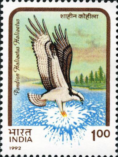India Birds of Prey error stamp, 1992